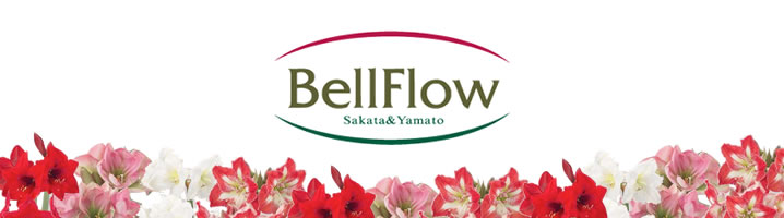 Bell Flowトップ