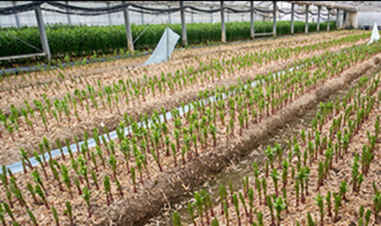 種苗販売事業(農協・営利農家向け)
