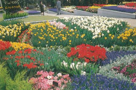 花博での出展作品 約500㎡に500品種の花を1週間ごとに植え替え、延べ15万本の花を咲かせた