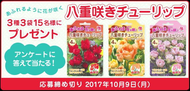 あふれるように花が咲く「八重咲きチューリップ」3種3袋を15名様にプレゼント!