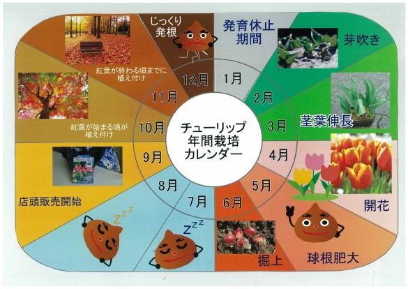 チューリップ年間栽培カレンダー