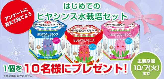 「はじめてのヒヤシンス水栽培セット」1個を10名様にプレゼント!