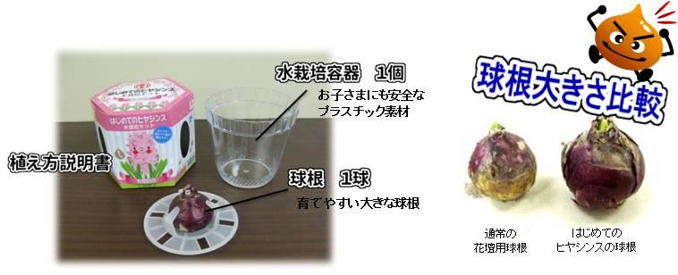 hajimete_Hyacinthus_set_naiyo