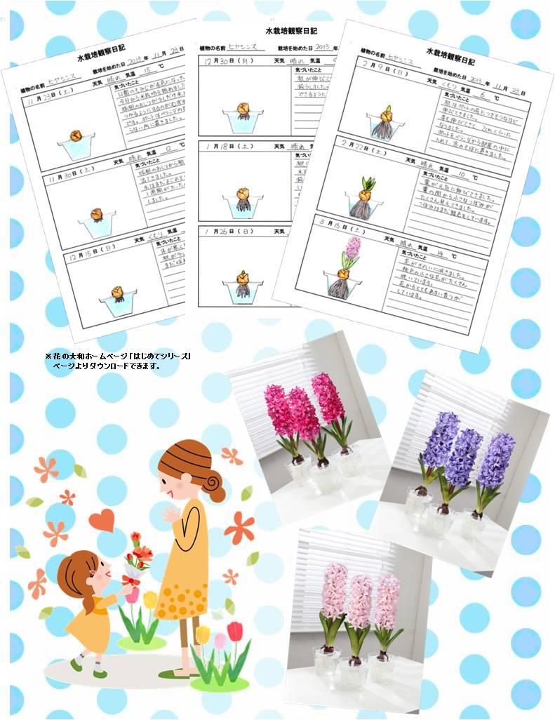 hajimete_Hyacinthus_set_try_nikki