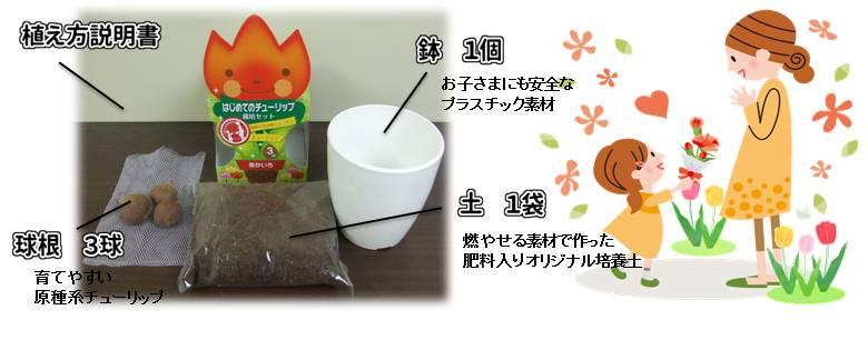 hajimete_tulip_set_kosei