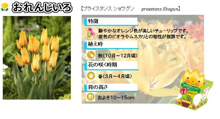 hajimete_tulip_set_lineup_orange