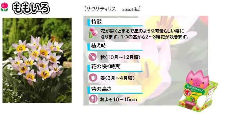 hajimete_tulip_set_lineup_pink