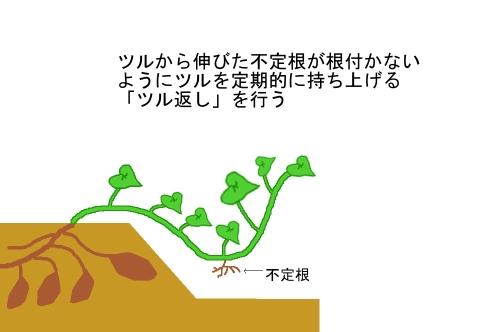 howto-satsumaimo_tsuchiyose