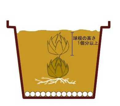howto_lilium_uetsuke_hachiue