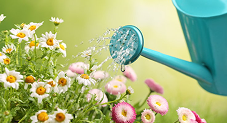 花や野菜の育て方